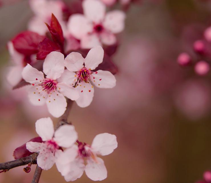 L'importanza di mangiare di stagione: la primavera con AMC
